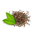 fresh green and dried tea vector image vector image