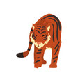 powerful tiger wild cat predator cartoon vector image