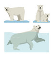 white polar bear set of wild life vector image vector image