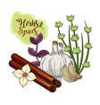 herbs and spices plants and organ food vector image vector image
