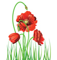 Poppy with Grass2 vector image