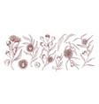 blooming eucalyptus hand drawn vector image