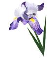 Flower iris vector image