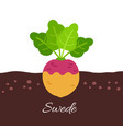 swede icon with title vector image
