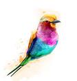 Tropic colorful bird watercolor cute small