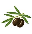 olive black vector image