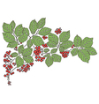 background with leaves and with red berries vector image vector image
