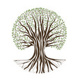 big oak tree vector image vector image