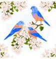 bluebirds thrush small songbirdons on an apple vector image vector image