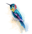 colorful humming bird watercolor tropic vector image vector image