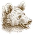 engraving bear head vector image