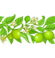 lime branches pattern on white background vector image