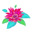 cute gerbera on white background vector image vector image