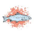 sketch trout fish underwater animal sea vector image vector image