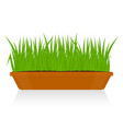 green grass in clay pot isolated vector image vector image