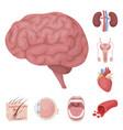 internal organs of a human cartoon icons in set vector image