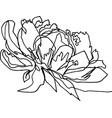 peony flower close-up minimalist vector image vector image