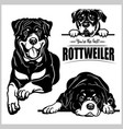 rottweiler - set isolated vector image vector image