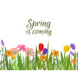 seamless floral border with spring flowers vector image