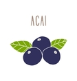 Acai berries superfood vector image vector image