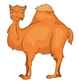 character camel vector image