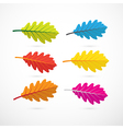 Colorful Oak Leaves Isolated on White Background vector image vector image