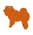Flat pet chow vector image vector image
