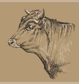head bull hand drawing brown vector image