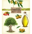 Realistic of fruit olives vector image vector image