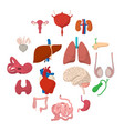 internal organs cartoon icons vector image