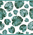 monstera philodendron split leaves exotic tropical vector image vector image