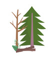 pine tree wood trunk nature isolated icon design vector image