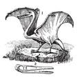 pterodactyl vintage vector image vector image