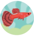 Guppy Highly detailed vector image vector image