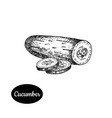 hand drawn sketch style cucumber vector image vector image