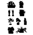 house plants silhouettes plant grown in a vector image vector image