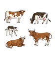 set different cows vector image vector image