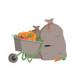wheelbarrow with bags and production pumpkins vector image