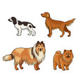 dogs different breeds in color set4 vector image vector image