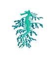 small weedy sea dragon turquoise seahorse marine vector image