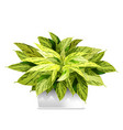 spotted plant in a white pot element home vector image vector image