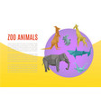 animal zoo banner cartoon exotic nature vector image
