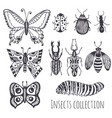 collection of hand drawind insects cute set of vector image