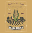 corn vegetable harvest retro vector image vector image
