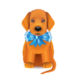 puppy blue bow vector image