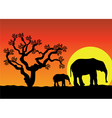 elephants in Africa vector image vector image