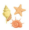 marine seashells icon vector image