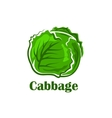 Cabbage vegetable with crunchy green leaves vector image vector image