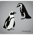 Penguin vector image