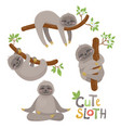set of cute sloths character in various positions vector image